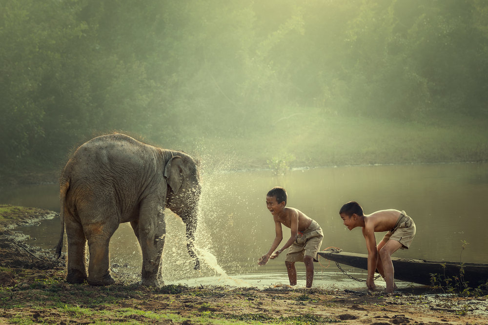 Слон в Камбодже