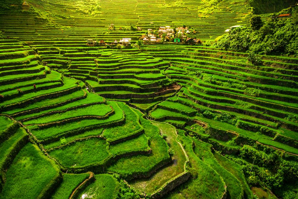 Рисовые террасы в Батаде