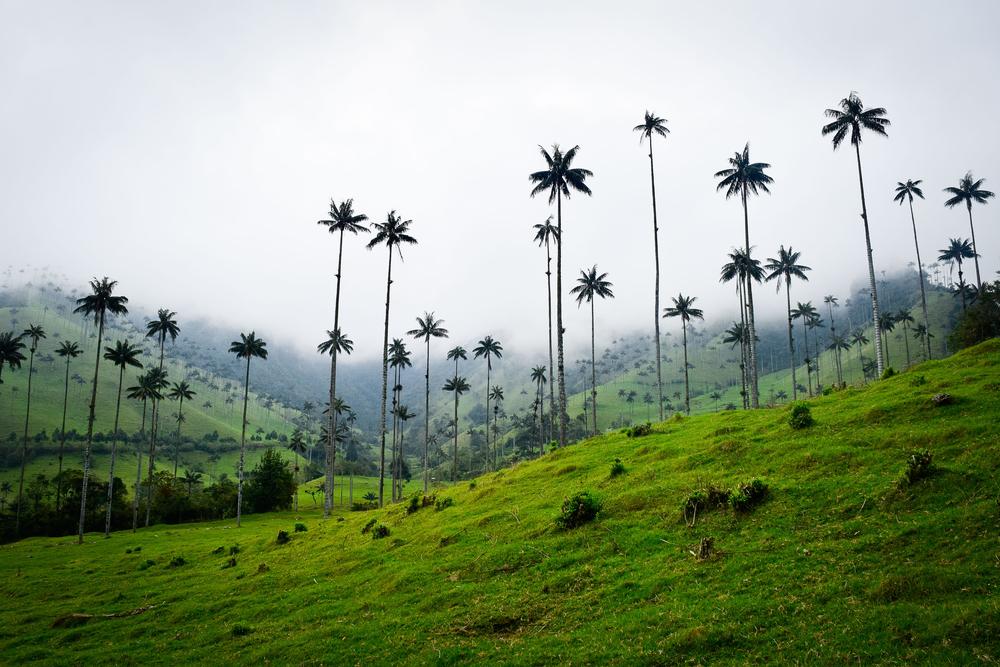 Долина самых высоких пальм