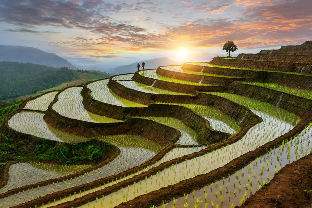 Рисовые террасы на севере Таиланда