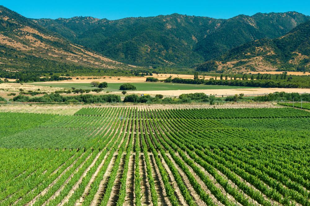 Виноградная долина Кольчагуа