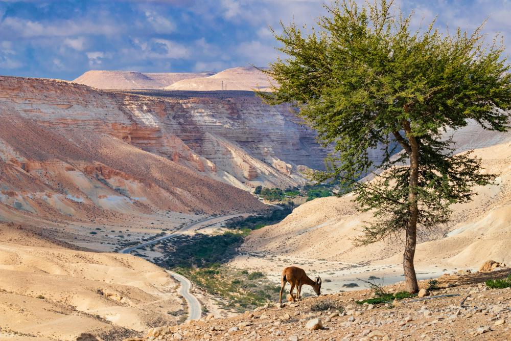 Негев - пустыня на юге Израиля