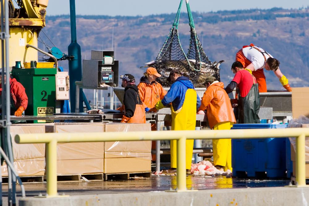 Рыбаки взвешивают улов, гавань Аляски