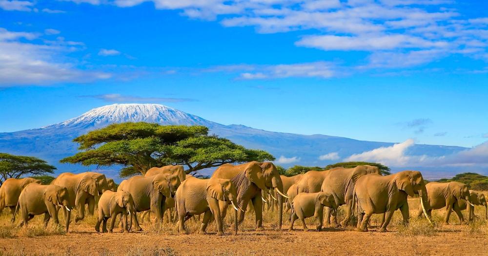 Заснеженные горы Килиманджаро в Танзании