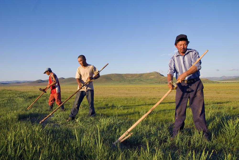 Работа в Монголии для мужчин