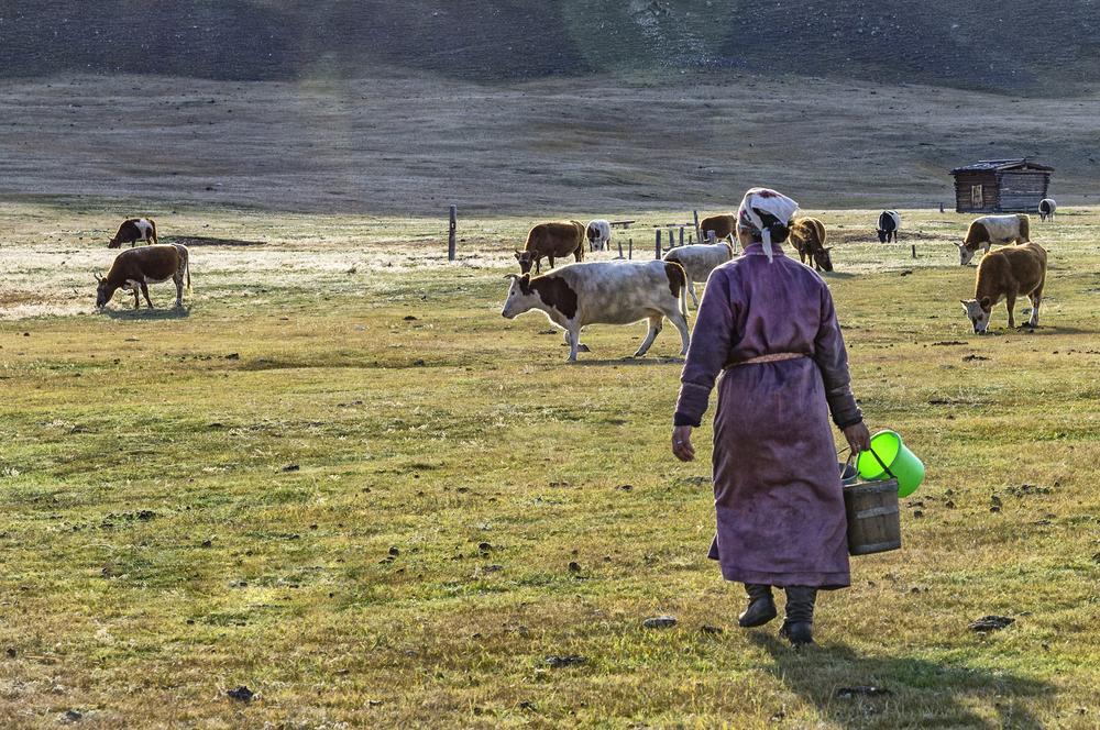 Сельское хозяйство в Монголии