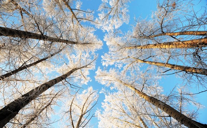 Климат в Новосибирске