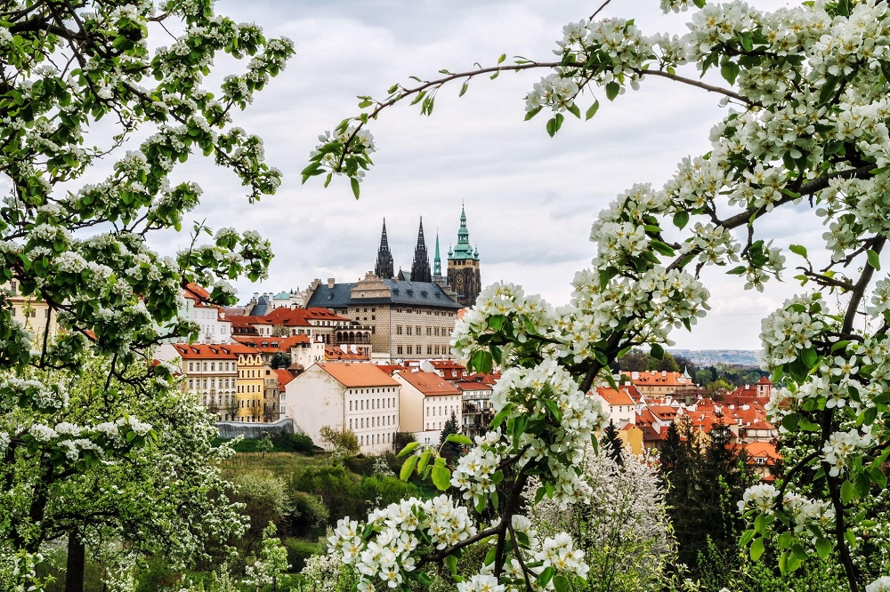 Варианты получения ВНЖ Чехии