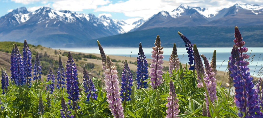 Плюсы и минусы ПМЖ в Новой Зеландии