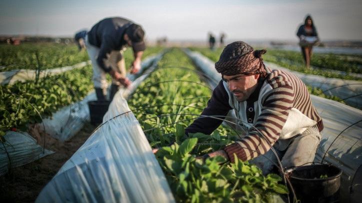 Сезонная работа в Израиле