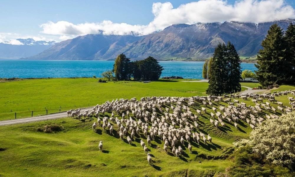 Плюсы жизни в Новой Зеландии