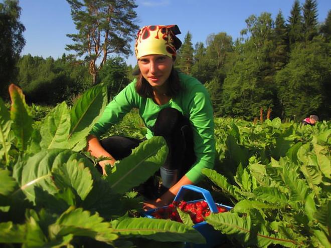 Сбор клубники в Финляндии
