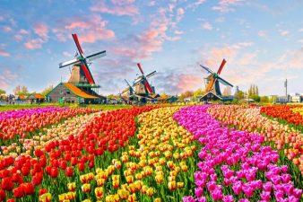 Работа в Голландии