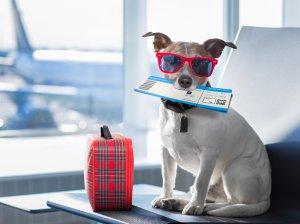 Вывоз собаки за границу: как организовать перевозку и какие документы подготовить